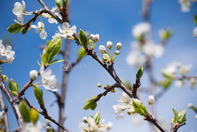 Spring has sprung…