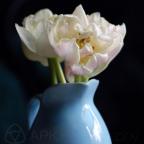 Still Life: Tulips in Blue Vase