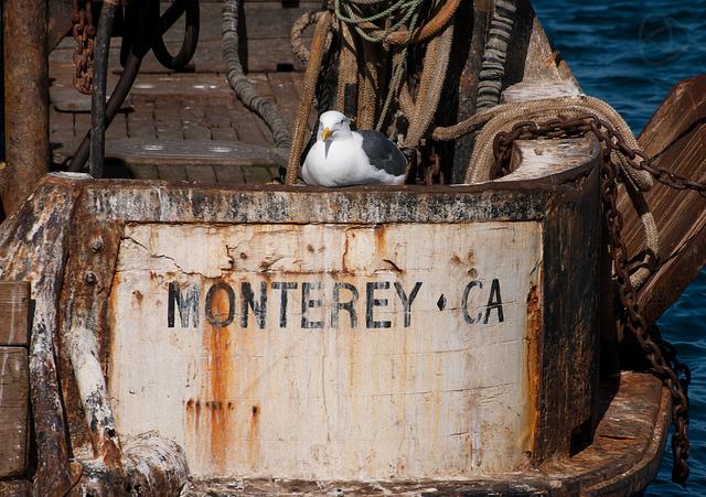 Monterey Bay Morning