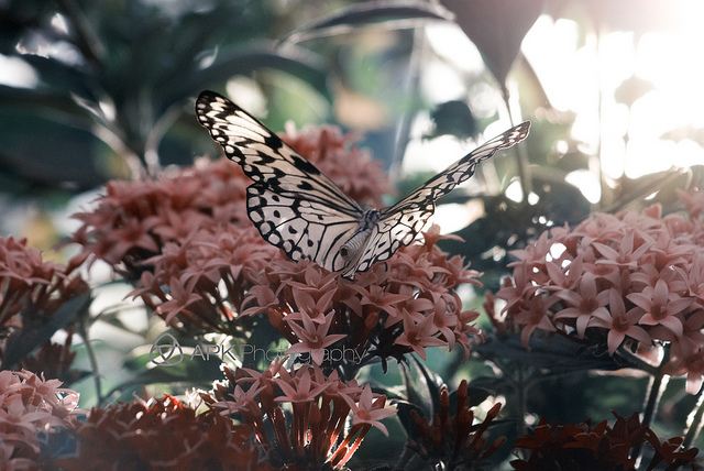 Happiness is a butterfly…