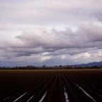 Salinas Valley, winter into spring