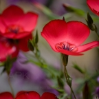 Spring Flowers, freshly-picked fine art photo prints