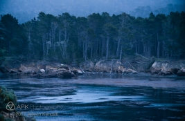 WM_PointLobos_bluehour-1-2