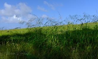 WM_StNicholasAbbey_Barbados-0309