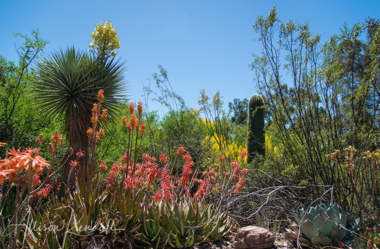 Spring in the desert, Phoenix, Arizona