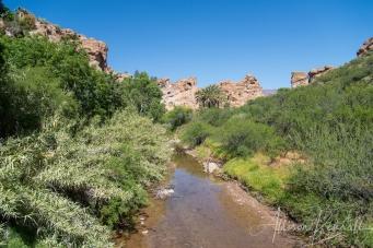 Spring in the desert, Phoenix, Arizona