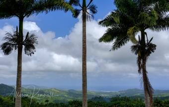 A walk through the lush jungle and limestone cliffs of Welchman Hall Gully, Barbados