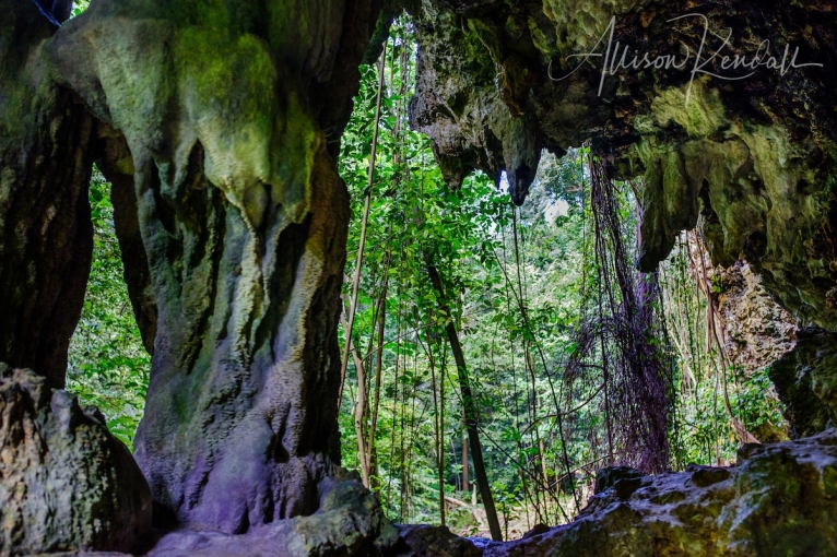 A walk through the lush jungle and limestone cliffs of Welchman Hall Gully, Barbados