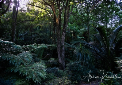 Textural foliage deep in the New Zealand jungle, glossy green leaves and layers of branching trees, ferns and palms create a moody scene.