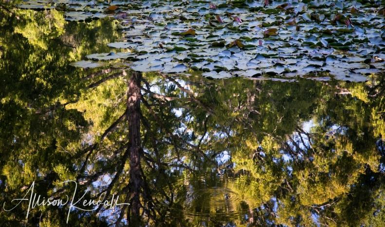 Scenes from the lush green pathways of Pukekura Park in New Plymouth, New Zealand