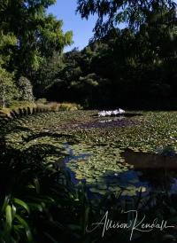 WM_Pukekura_Park_NZ_40