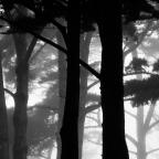 Forest fog   Big Sur, California